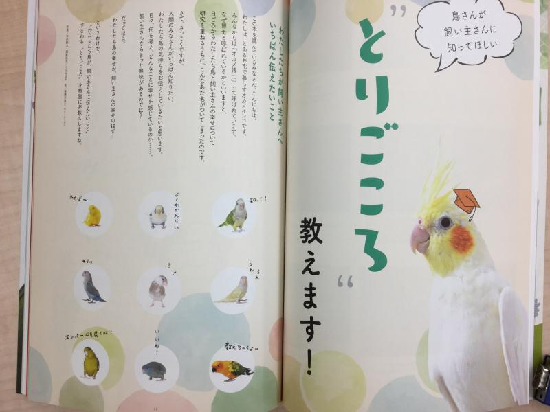鳥ぐらしの特集「とりごころ教えます!」では鳥の気持ちを理解するのに役立つ情報が