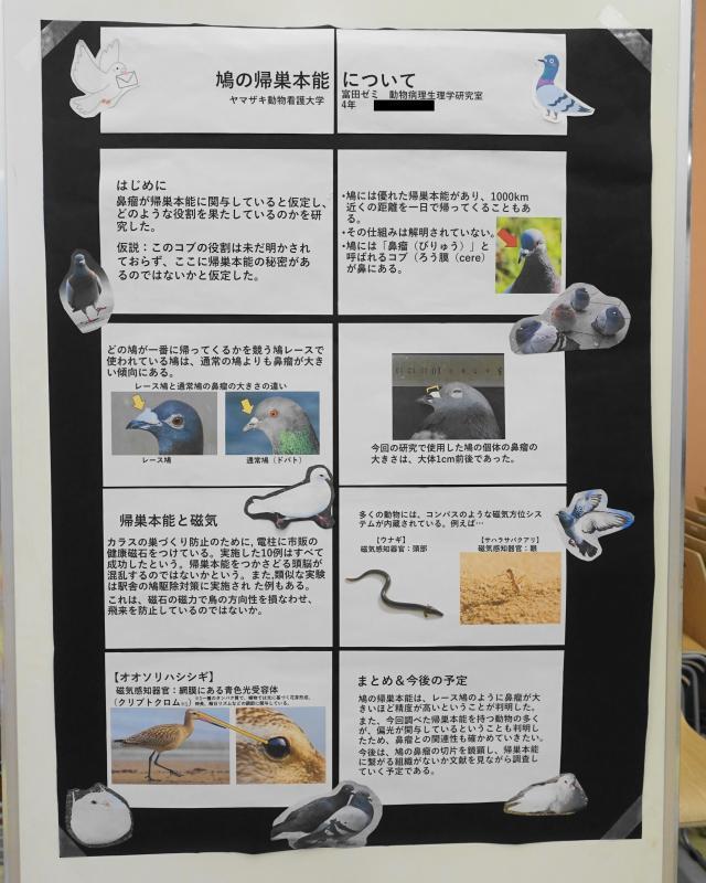 ヤマザキ動物看護大学の卒業研究で鳩の帰巣本能に関する研究