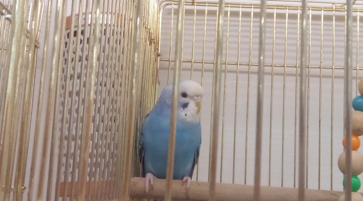 インコなどの飼い鳥に対する保温の必要性