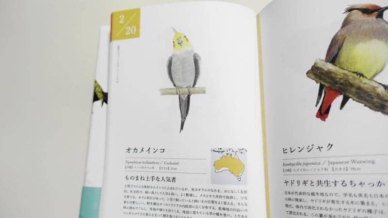 366日の誕生鳥辞典にはインコ・オウムなど飼い鳥も多数掲載。オカメインコは2月20日