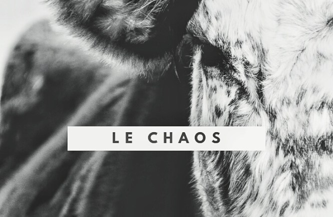 A bull's photograph with the tittle of poem Le Chaos by Kaaya Faye
