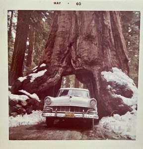 Yosemite road trip