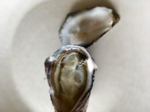 Pegasus Bay oysters