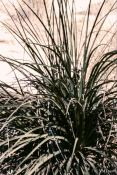 Spikey Leaves