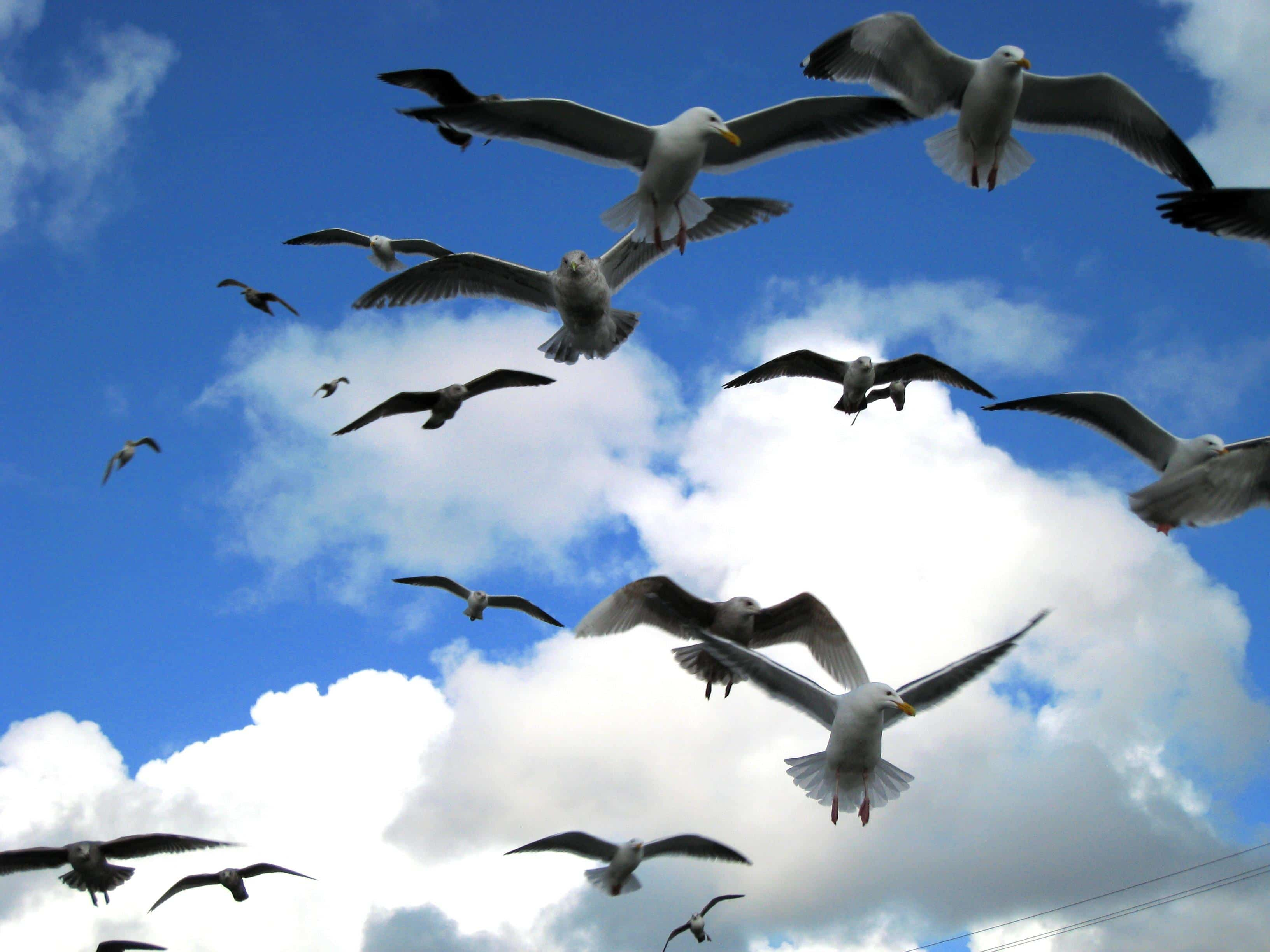 seagulls on flight