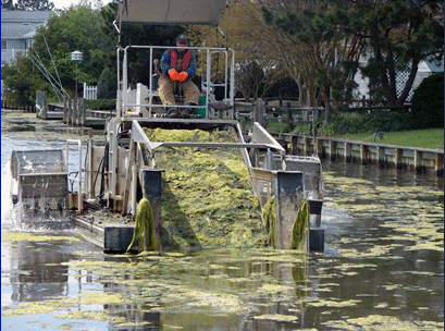 DENRC algae harvester hard at work in the Brandywine Canal in South Bethany