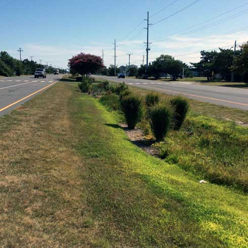 bioretention (rain garden) area located on DE. Rt. 1 in South Bethany