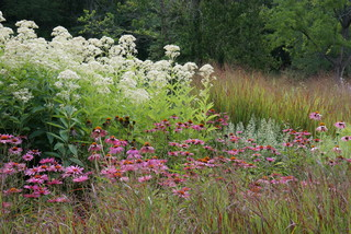 How to Bring Native Plants Into an Established Garden (4 photos)