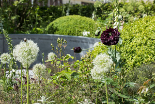 A Scented Garden Designed to Lift the Spirit (10 photos)