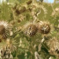 Canal Flora: Burdock