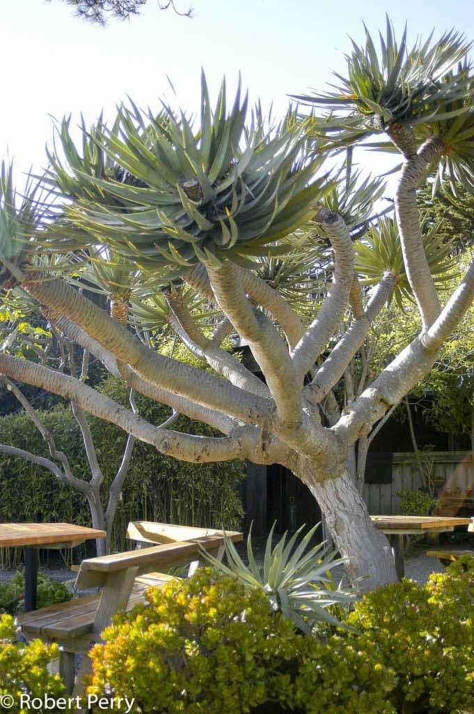 Dragon Tree Inland Valley Garden Planner
