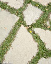 Dymondia margaretae - Inland Valley Garden Planner