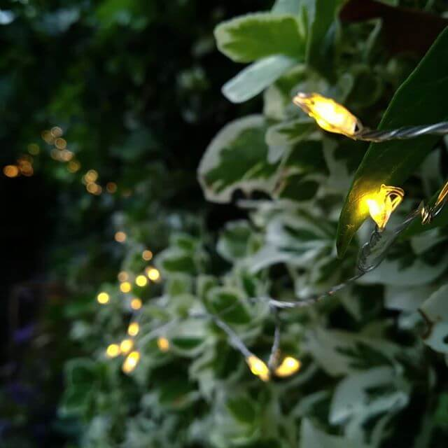 Great photo of our 7m outdoor lights in action. They look amazing on the ivy- thanks for sharing