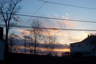 trees amd sky at Hamilton St