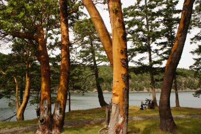 N.... campground - Saturna Island