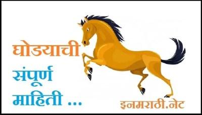 horse-information-in-marathi