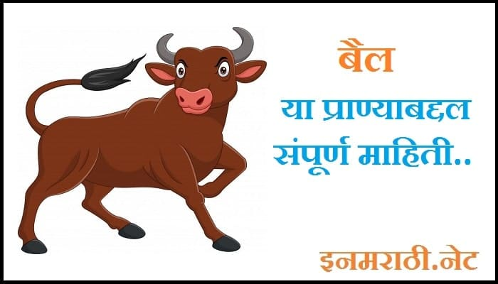 ox-information-in-marathi