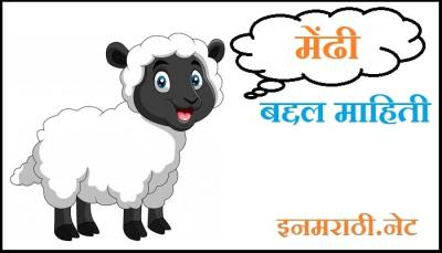 sheep-information-in-marathi
