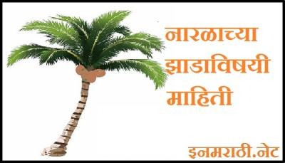 coconut-tree-information-in-marathi