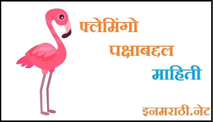 flamingo bird information in marathi