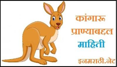 kangaroo information in marathi