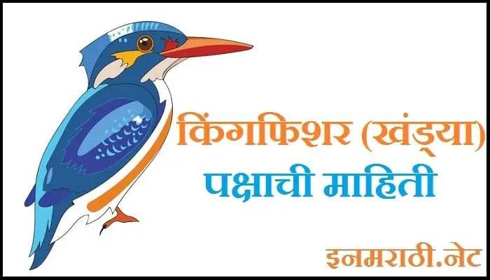 kingfisher bird information in marathi
