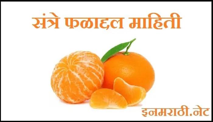 orange-information-in-marathi
