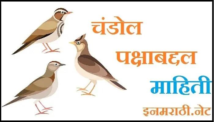 Chandol Bird Information in Marathi