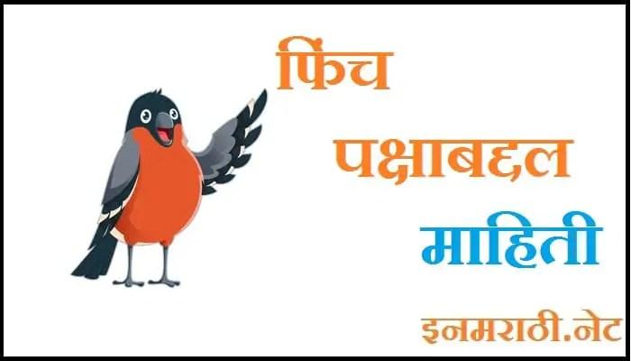 finch bird information in marathi