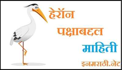 heron bird information in marathi