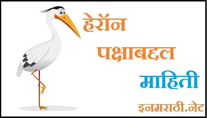 heron bird information in marathi