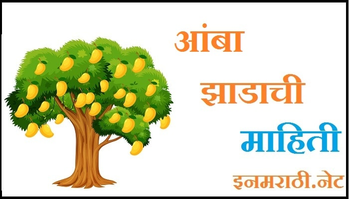 mango tree information in marathi