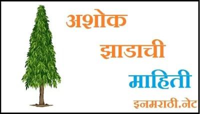 ashoka tree information in marathi
