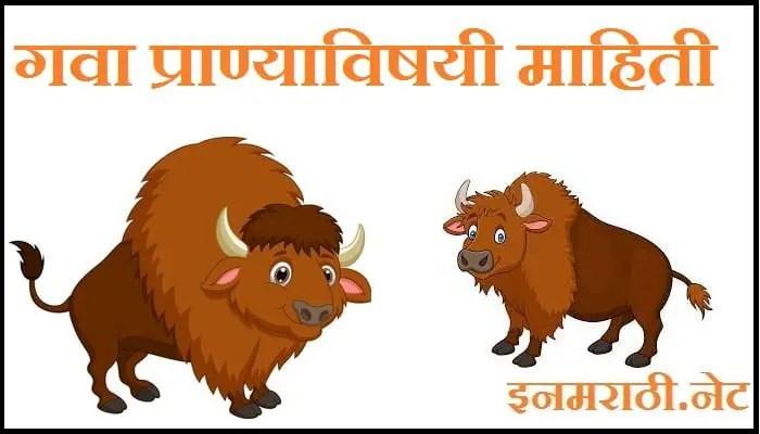gava animal information in marathi