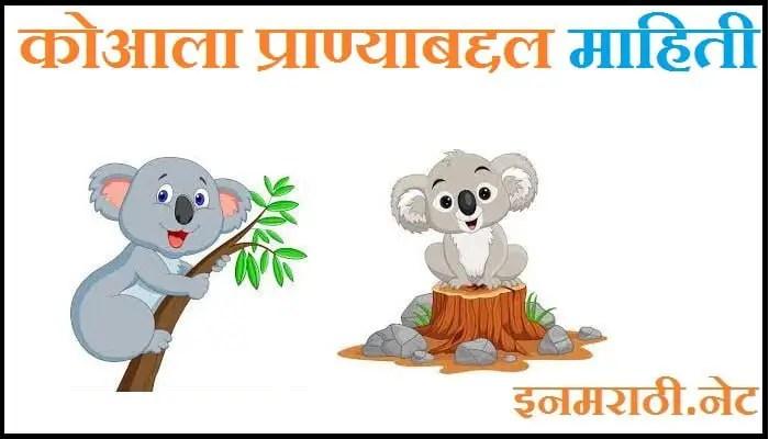 koala animal information in marathi