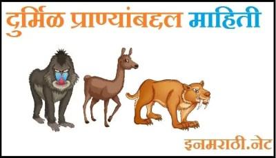 rare animals information in marathi