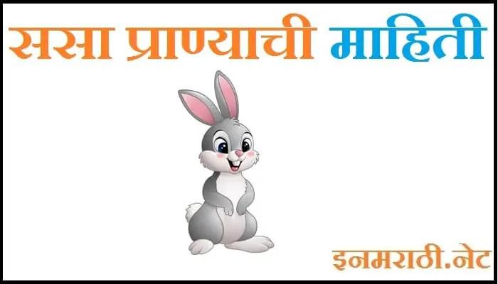 rabbit information in marathi