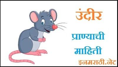 rat information in marathi