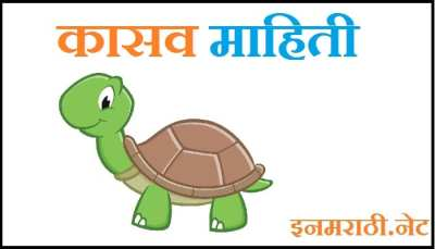tortoise information in marathi