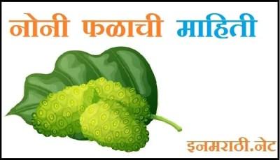 noni fruit information in marathi