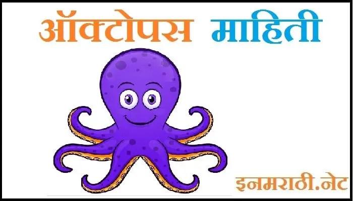 octopus information in marathi