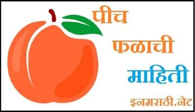 peach fruit information in marathi
