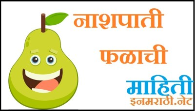 pear fruit information in marathi