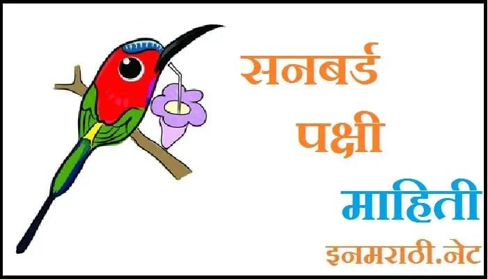 sunbird information in marathi