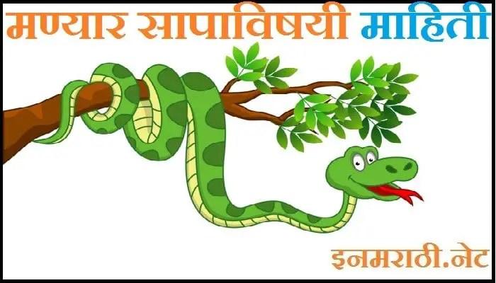 manyar snake information in marathi