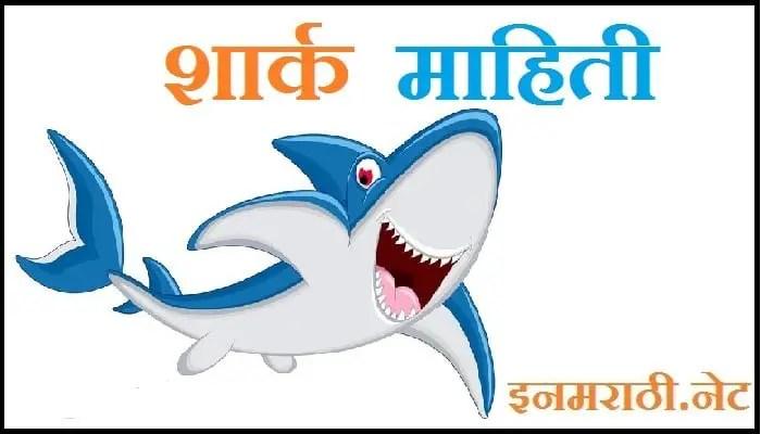 shark information in marathi