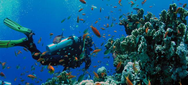 Tesoros submarinos lugares para conocer buceando  INmendoza