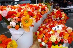 Flowers at the Menlo Park Farmer's Market