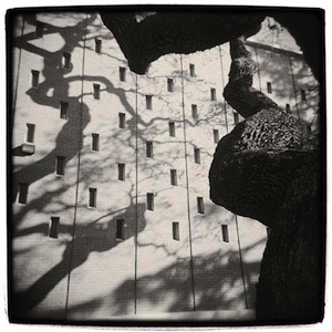 Old Oak - Robert Holmgren photo of a heritage oak casting shadows on a wall at MenloPark's SRI campus
