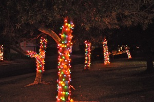 Hubbard Park Christmas Lights